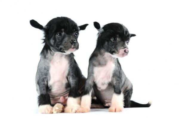 Két hónap alatt klónozzák házi kedvencünket!