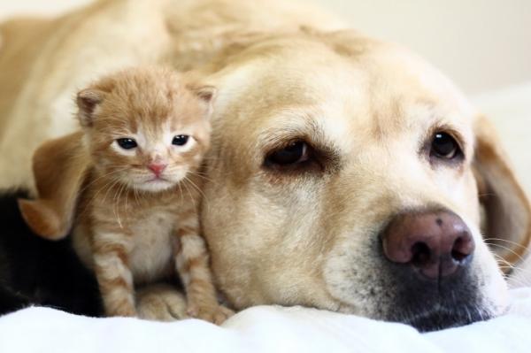 Kampányolnak a macska- és kutyahús-fogyasztás ellen