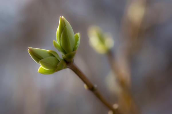 Károsította a tavaszi meleg a gyümölcsfákat?