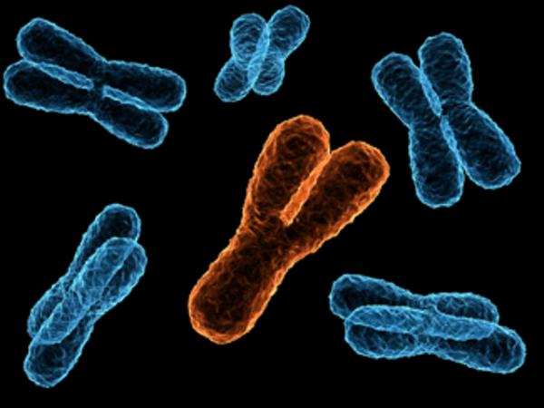 Mitől férfi a férfi? - Az Y-kromoszóma története