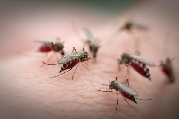 Vigyázat! Ezeket az új betegségeket terjesztik a szúnyogok