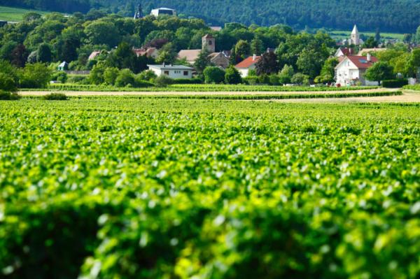 Egészséges francia receptek - Gasztro utazás
