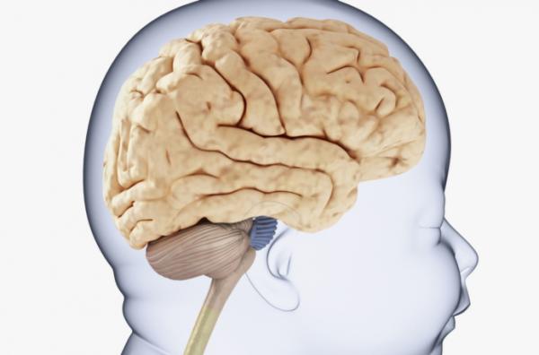 Így fejlődik a babák agya!