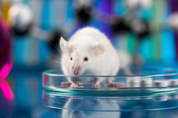 Ellenanyagot termelő állatokat fejlesztettünk