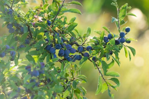 Őszi gyógynövények - Fűben-fában orvosság