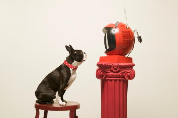 A kutyák is tévézni fognak! Új televíziós csatorna indul