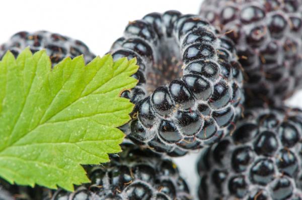 6 gyógynövény cukorbetegeknek
