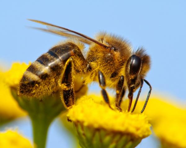 Bajban vannak a méhek, és velük együtt mi is