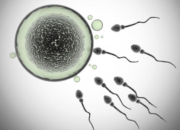 Így lesz egészséges a sperma!