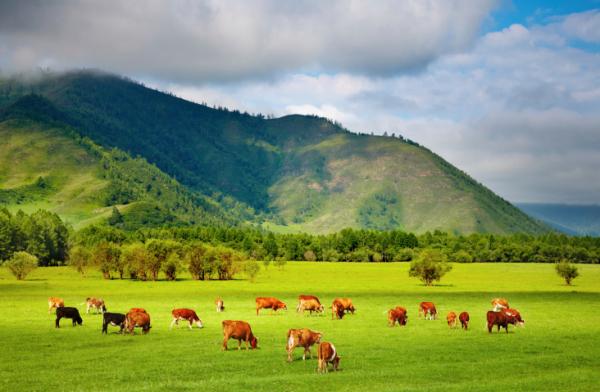 A vidéki szagok veszélye - Ne szippantsd be túl mélyen!