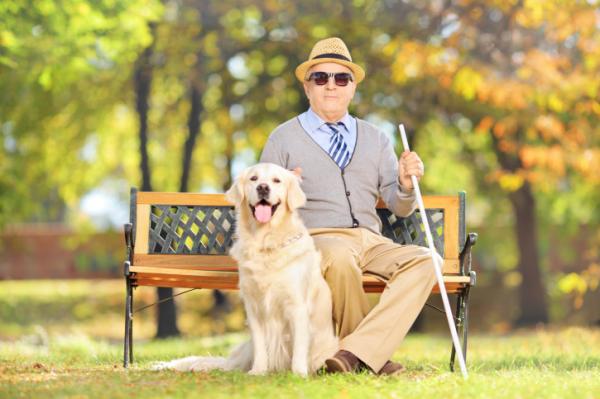 Több vakvezető kutyára lenne szükség