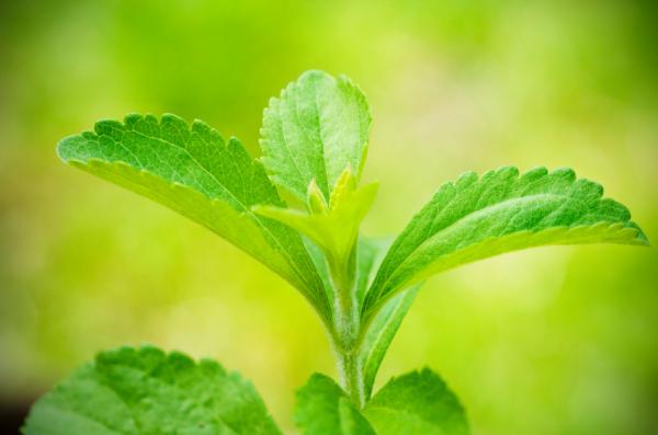 Gyógyuljon és fogyjon steviával
