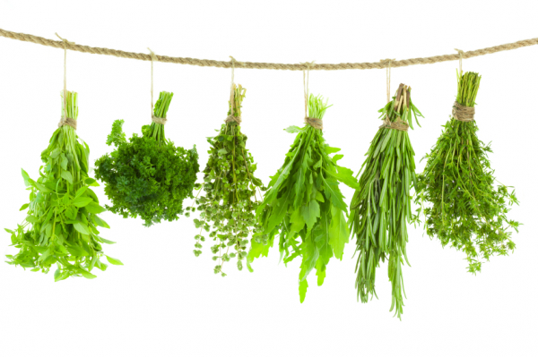 Szárítsunk fűszernövényeket télire!