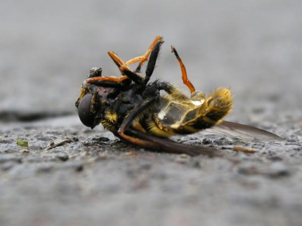 Rettenetes dolgok közelegnek: kihalt az amerikai méhek 42 százaléka
