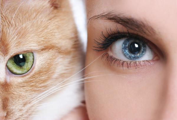 Macskája miatt vakult meg fél szemére